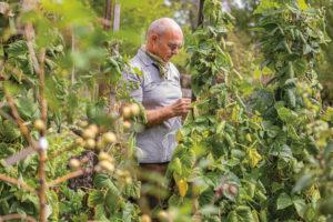 Michael Bühler im Gemüsegarten